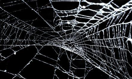Sidder du fast i sukker-spindelvævet?